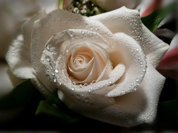 Je vous offre des fleurs at au fil des jours for Offre des fleurs