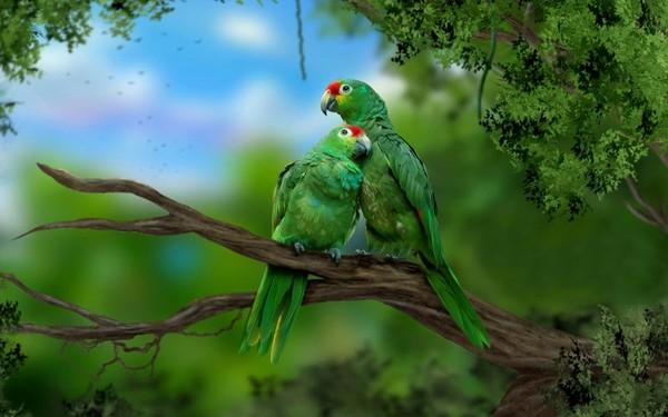 bel oiseaux