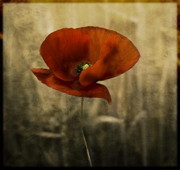 http://roseric.r.o.pic.centerblog.net/6426fc62.jpg