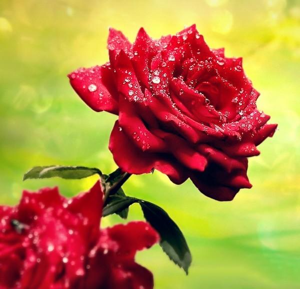 http://roseric.r.o.pic.centerblog.net/70e3cbf2.jpg