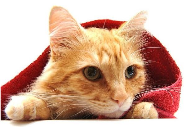http://roseric.r.o.pic.centerblog.net/8195bd83.jpg