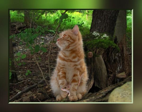 http://roseric.r.o.pic.centerblog.net/9b056a6f.jpg