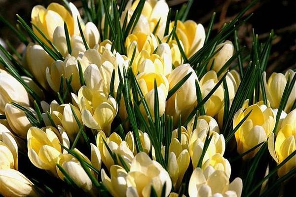 http://roseric.r.o.pic.centerblog.net/c9c05823.jpg