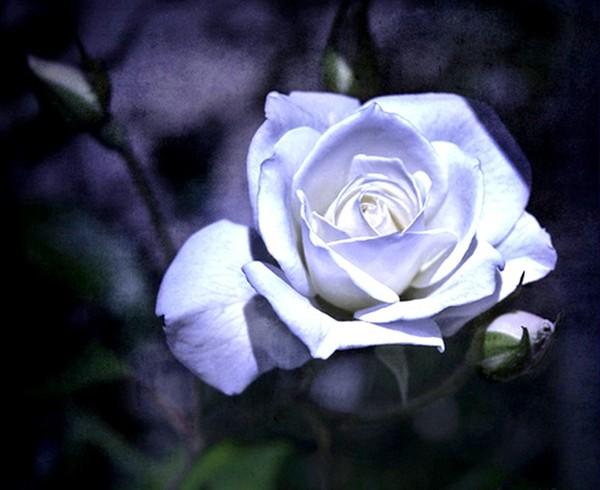 http://roseric.r.o.pic.centerblog.net/e6444fa7.jpg