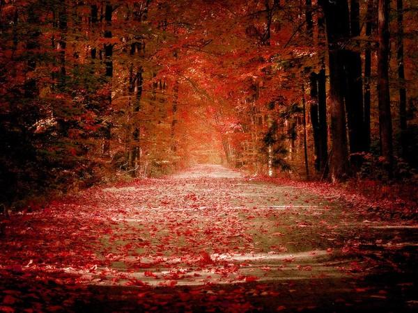 http://roseric.r.o.pic.centerblog.net/eb76eaf2.jpg
