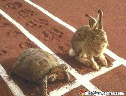 Est-ce la tortue qui va encore lemporter ?