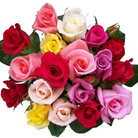 Anniversaire Fleur R24iqgj3